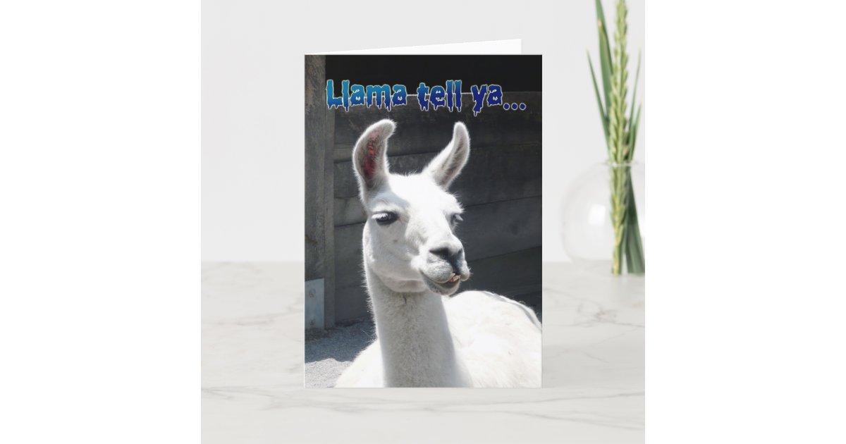 Funny Llama Happy Birthday Greeting Card Zazzle Com Au