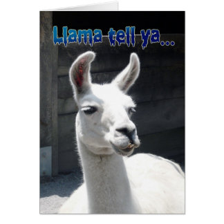 Funny Llama Happy Birthday Greeting Card