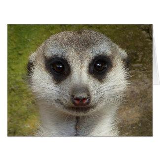 Funny meerkat 03.2 card