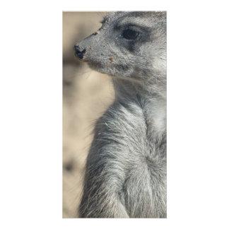 Funny Meerkat Photo Cards