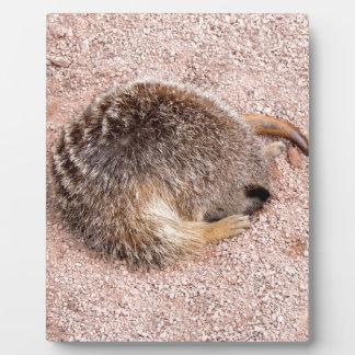 Funny Meerkat Plaque