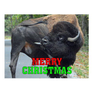 Funny Merry Christmas Bull Bison Licking Testicles Postcard