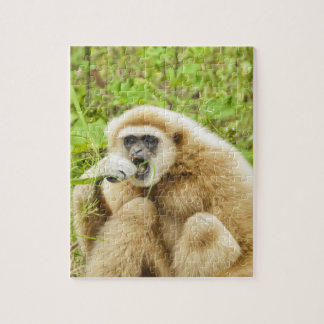 Funny Monkey Animal Jigsaw Puzzle