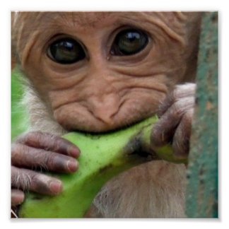 Funny Monkey Picture Print