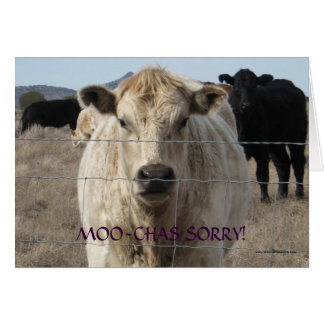 Funny Moo Black White Cow Apology - Ranch or Farm Card