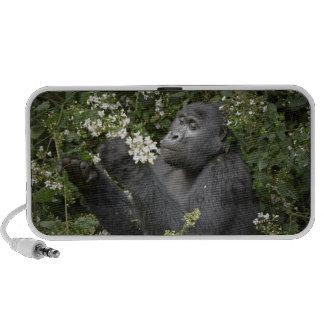 funny mountain gorilla eating flowers laptop speakers