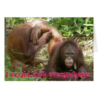 Funny Orangutan Valentine I Could Look Everywhere Card