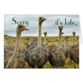 Funny Ostrich belated birthday card