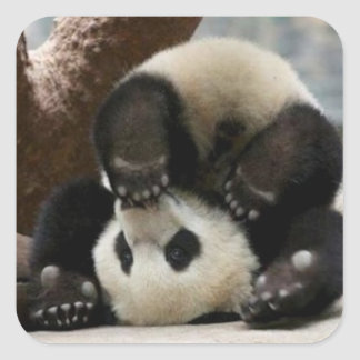 funny panda square sticker