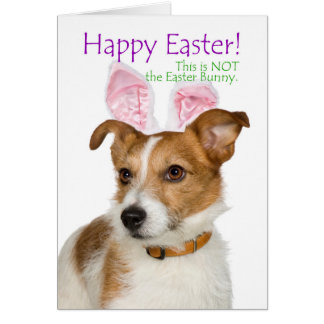 Funny Parson Russell Terrier Easter Card