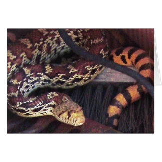 Funny Pest Control Mouser - Sonoran Gopher Snake Greeting Card