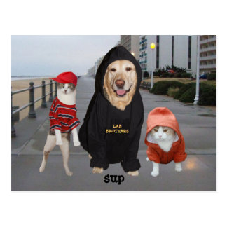 Funny Pets/Lab & Cats/Sup/Whazup Postcard