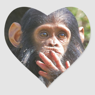 funny picture of young chimpanzee heart sticker