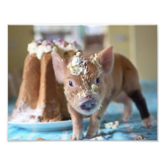 Funny pig and  the cake photo