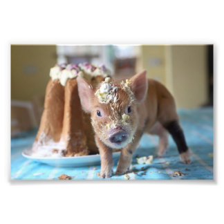Funny pig and  the cake photo art