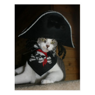 Funny Pirate Cat Post Card