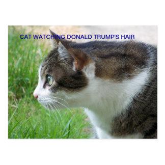Funny Postcard: Cat Watching Donald Trump's Hair Postcard