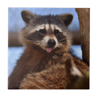 Funny Raccoon Sticking It's Tongue Out Tile