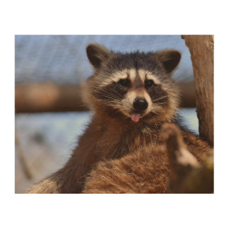Funny Raccoon Sticking It's Tongue Out Wood Wall Decor