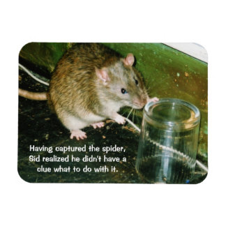 funny rat magnet