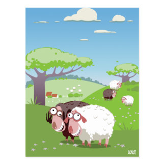 Funny Sheep Postcard