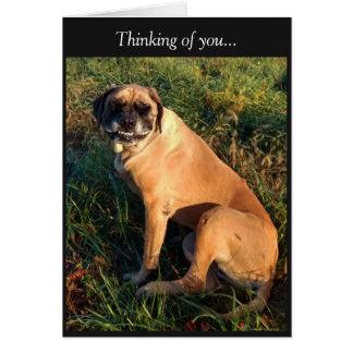Funny Smiling English Mastiff Dog card