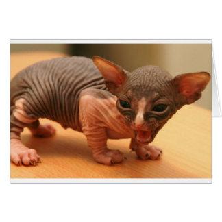Funny sphynx kitten greeting card