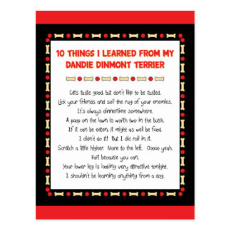 Funny Things I Learned From Dandie Dinmont Terrier Postcard