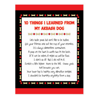 Funny Things I Learned From My Akbash Dog Postcard