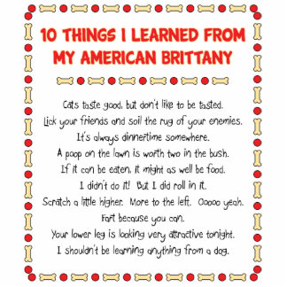 Funny Things I Learned From My American Brittany Photo Sculptures