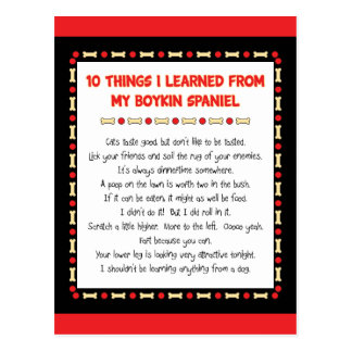 Funny Things I Learned From My Boykin Spaniel Postcard