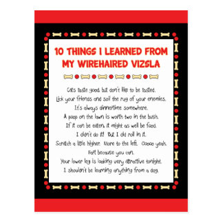 Funny Things I Learned From My Wirehaired Vizsla Postcard
