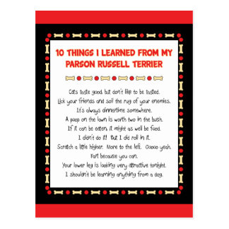Funny Things I Learned From Parson Russell Terrier Postcard