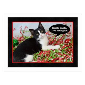 Funny Tuxedo Cat Christmas Postcard