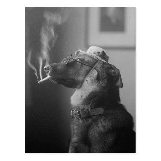 Funny Vintage Dog Wearing Hat Smoking Cigarette Postcard