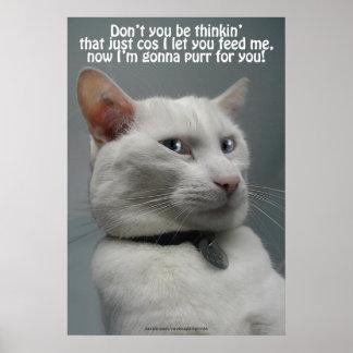 Funny White Cat Humor Pet-lover s Poster