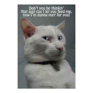 Funny White Cat Humor Pet-lover's Poster