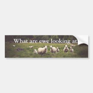 Funny White Fluffy Sheep & Lamb Field Trees Rocks Bumper Sticker