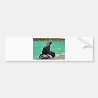 Fur Seal Bumper Sticker