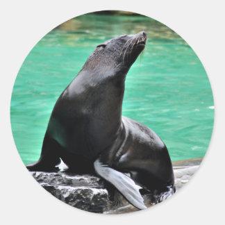 Fur Seal Round Sticker