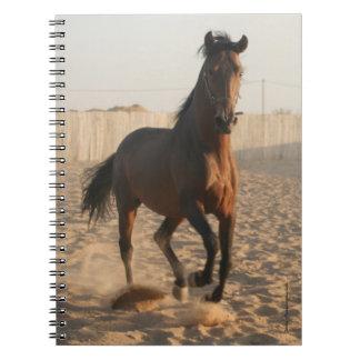 Furioso #15 notebook