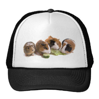furnace guinea pigs who eat, cap