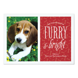 Furry and Bright Pet Photo Card