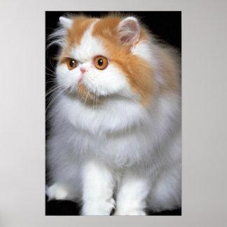 Furry Feline Posters