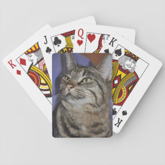 Furry Friend-Gray Tiger Stripe Cat Playing Cards
