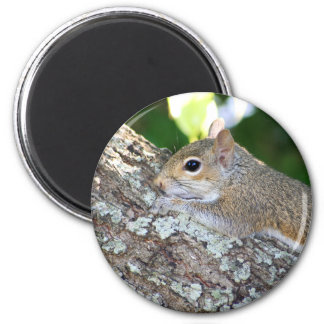 Furry Hello! magnet