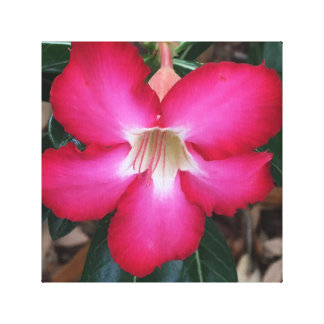 Fuschia desert rose canvas print