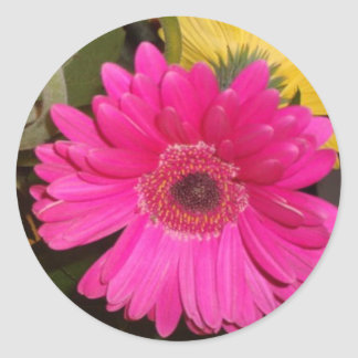 Fuschia Gerbera Daisy Sticker