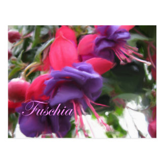 Fuschia Postcard