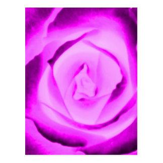 Fushia Rose Bud Postcard